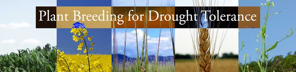 plant breeding for drought tolerance banner photo
